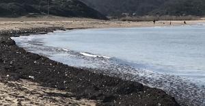 (Özel) İstanbulluların akın ettiği sahil çöp yuvasına dönerek kızıla boyandı