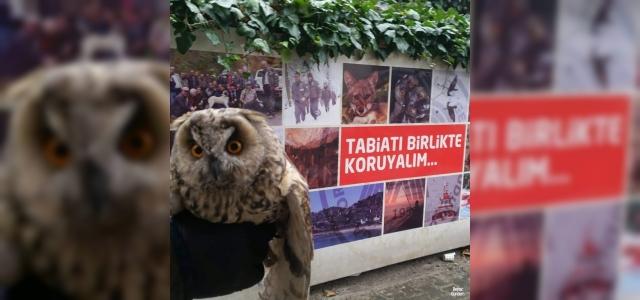 Vatandaşlar tarafından bulunan yavru baykuş koruma altına alındı