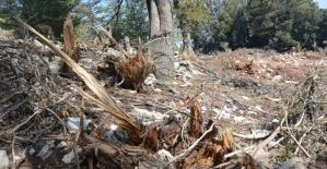 Antalya'da hazine ve sarı alan arazilerindeki ağaç katliamına tepki