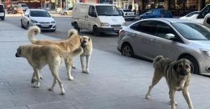 Erzincan'da sokak köpekleri tehlike saçıyor