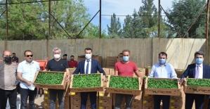 Batman'da çiftçilere yüzde 90 hibeli biber fidesi dağıtıldı