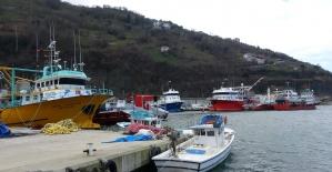 Düzce'de balık avı yasağı başlıyor