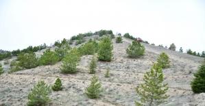 Mamak'ta Bal Ormanı'nın startı verildi