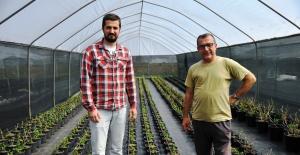 Samsun'da kesme çiçekçilik yaygınlaşıyor