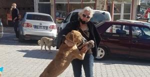 İstanbul'da tedavi götürülen hasta sokak köpeği Emet'e geri getirildi