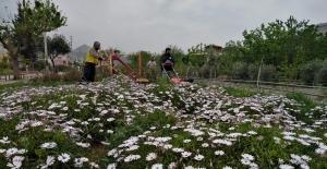 Kozan'da parklara bayram bakımı