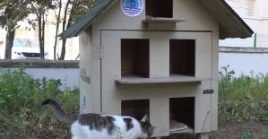 Tuzla'da sokağa atılan yavru kediler sıcak yuvasına kavuştu