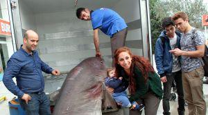 Bursa'da 673 kilogramlık dev köpek balığı yakalandı