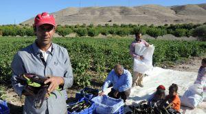 Patlıcan; tarlada 10 kuruş, pazarda 75 kuruş, tezgahta ise 1 lira